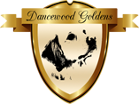 Dancewood Goldens